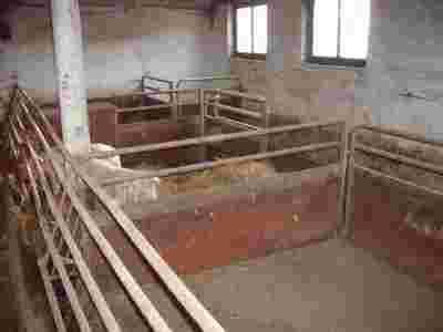 Poważne Kojce ,wygrodzenia dla świń Alfa Lawal OM69